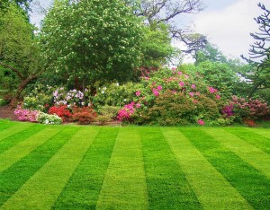lawn-care-landscaping